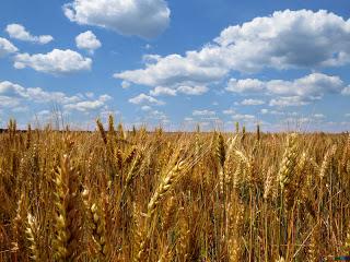 L'agriculture biologique est précieuse